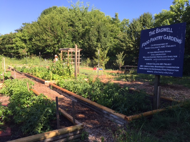 The Bagwell Food pantry garden beds provides a wide variety of produce, particularly during the summer months.