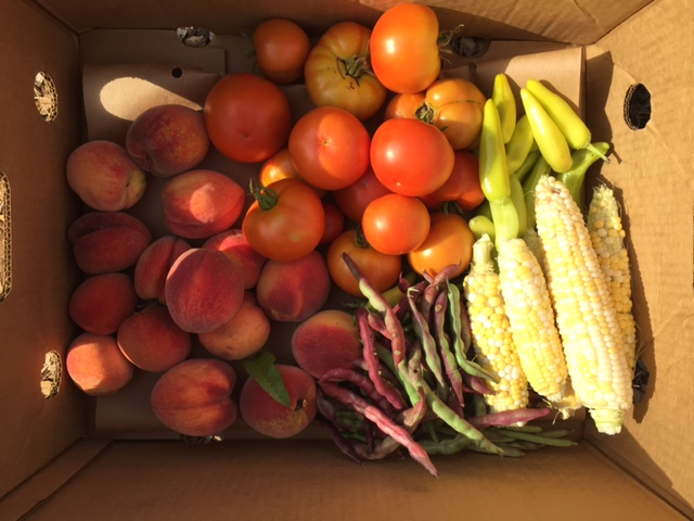 A harvest of first peaches grown in the food pantry orchard along with corn, bean, tomatoes, and peppers.