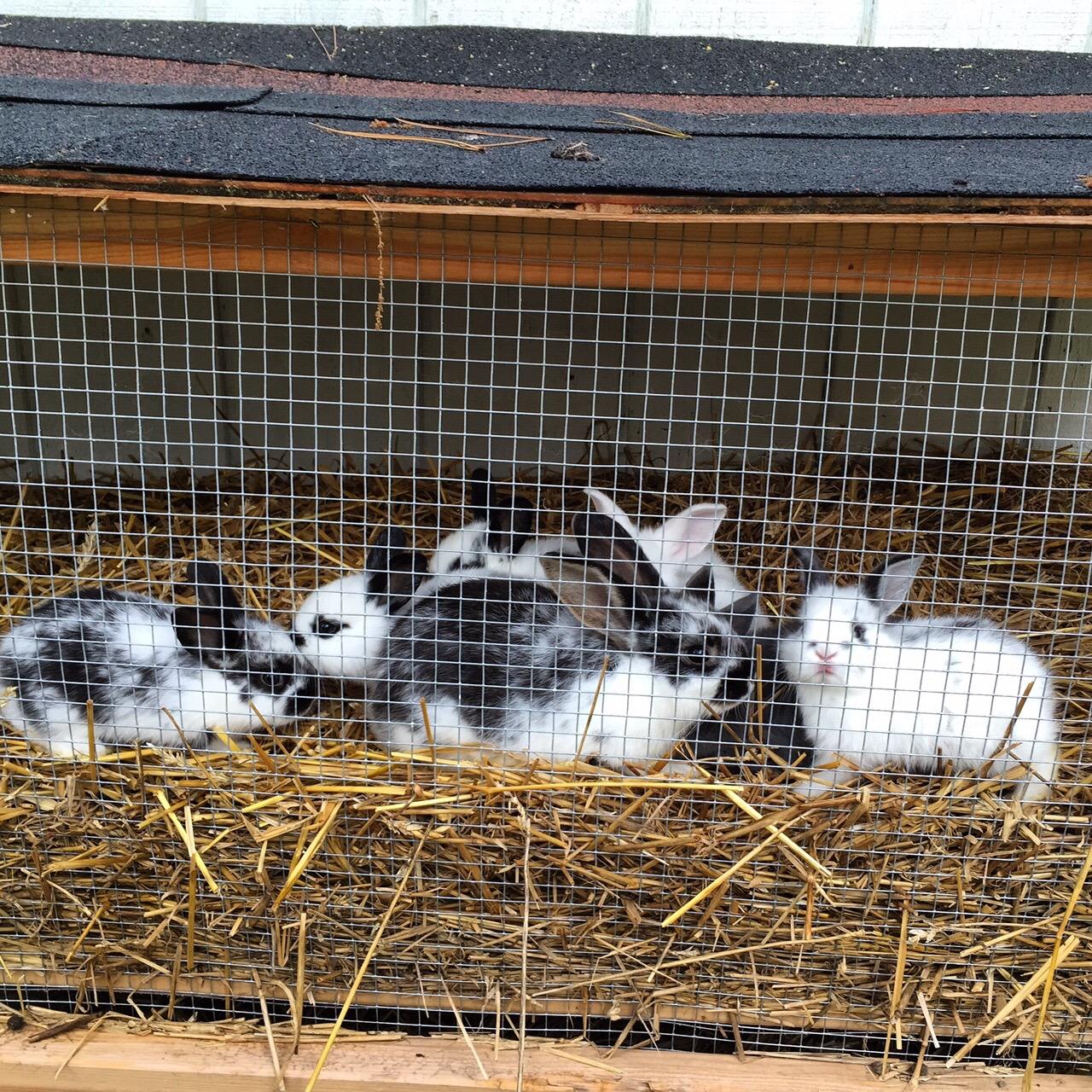 Rabbits at Dogwood Garden