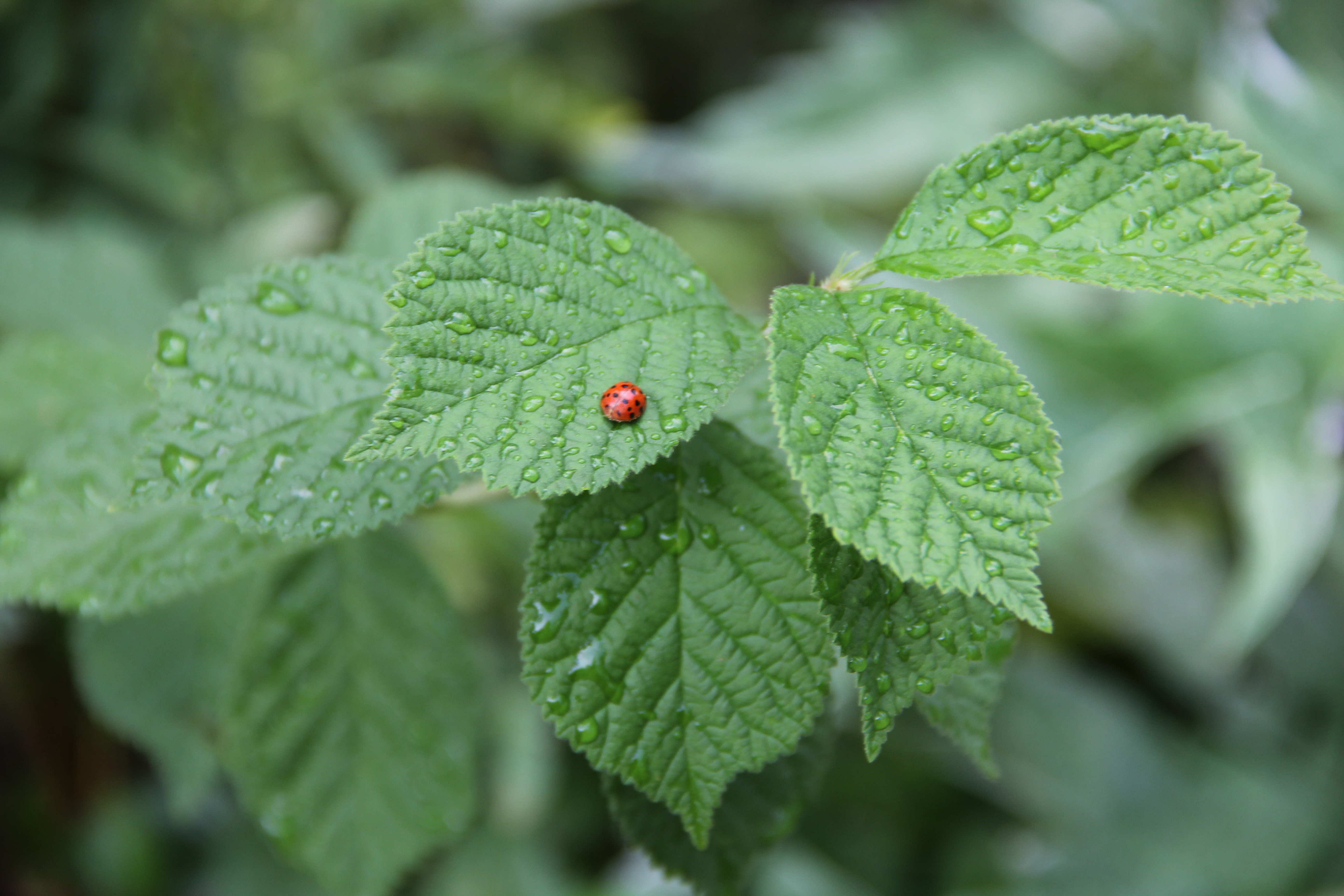 Some insects are helpful in the garden. Ladybugs prey on aphids which are a species of insect that can destroy plants. Before you mush a bug, research it to see if its a garden helper or a harmer