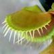 flytrap-icon