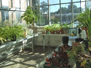 greenhousehomepic3